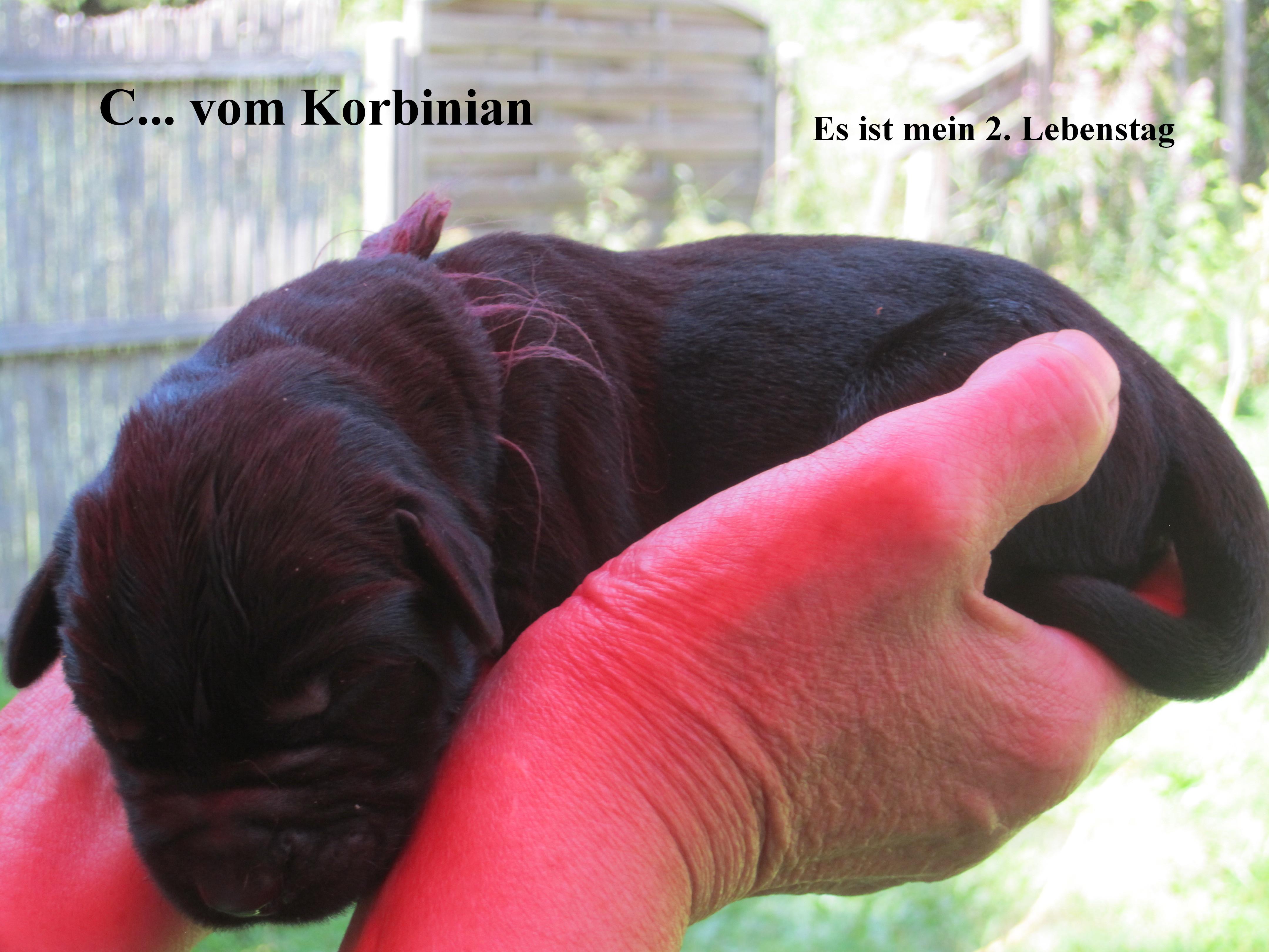 C vom Korbinian 09.08.2015